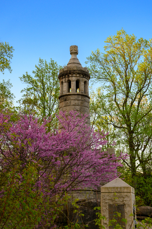 UP6_5202.jpg :: Redbuds near the 44th NY Monument on Little Round Top, Gettysburg.