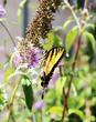 Butterfly v1.jpg