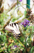 Butterfly v2.jpg