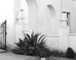 Agave Plant La Mision San Xavier del Bac D.jpg