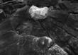 Floating Rock Schoodic Head Maine(1).jpg