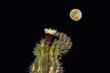 Cactus Moon 2.jpg