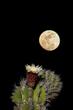 Cactus Moon 3.jpg
