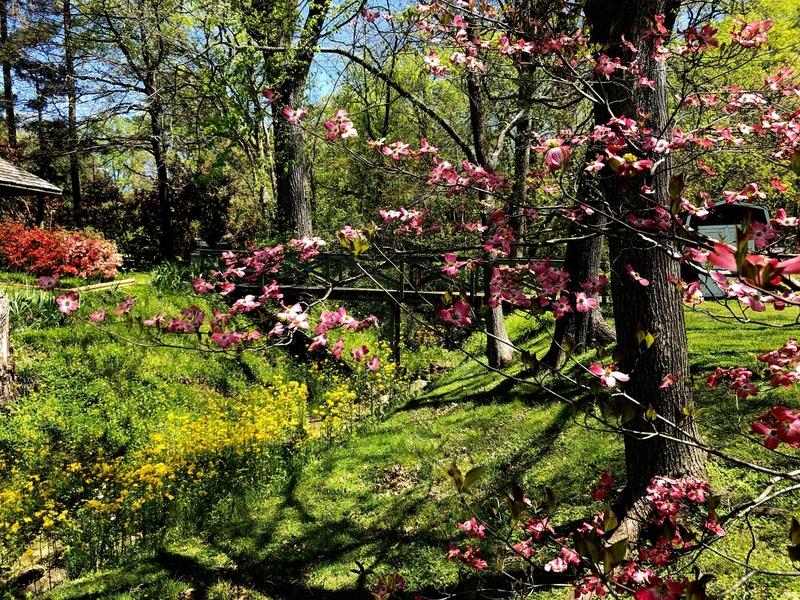 Southern Creek Springtime.jpg