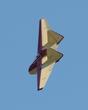 FAUVEL AV-36 GLIDER P5082198(1).jpg