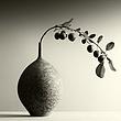 Low Hanging Fruit.jpg