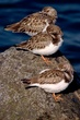 RA_Birds000015.jpg