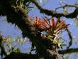 RA_Flora000013.jpg
