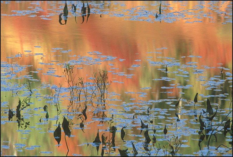 VTFF96Bs Pond .5.jpg