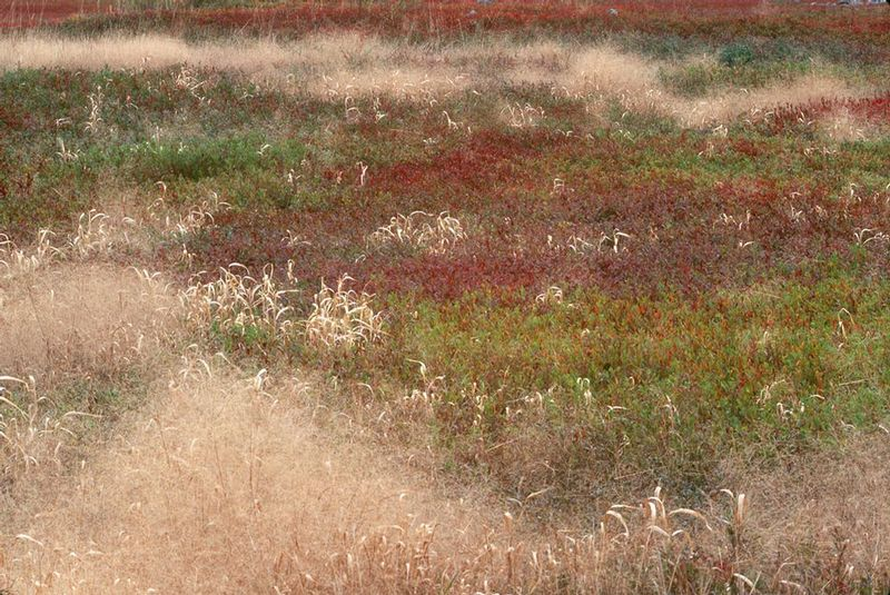 ME- Colored Grass 2.jpg