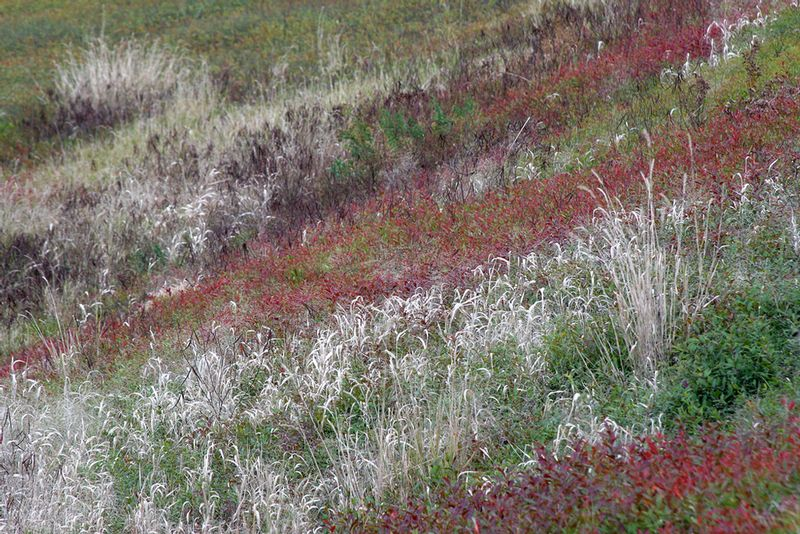 ME3412 Colored Grass.jpg