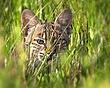 Bobcat 1201.jpg