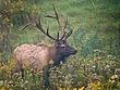 PA Elk 1202.jpg