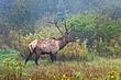 PA Elk 1203.jpg