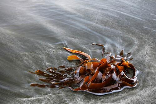 GB201708 Seaweed.jpg
