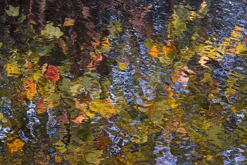 NL_S003F Autumn.jpg