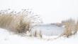 NL21L003 Snow.jpg