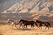 3 horses late afternoon 0909 0A1G7976 m.jpg