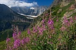 Fireweed & Grinnell Glacier m.jpg