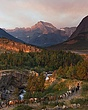 Leading the Herd in Glacier National Park m.jpg