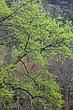 Spring Green Devils Gulch m.jpg