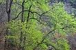 Spring Green in Devils Gulch 2 m.jpg