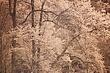 Springtime Devils Gulch, Infrared 3 m.jpg