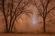Trees & High Level Bridge on a Foggy Night m.jpg