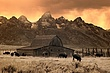 buffalo at barn IR 1009 CRW_2825 m.jpg