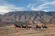 chasing horses across the plain 1009_MG_6851 m.jpg