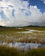 cloud trio everglades 1008_A1G2599 m.jpg