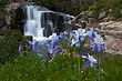 columbine and waterfall yankee boy basin 0709_MG_5480 m.jpg