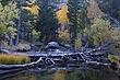 fallen tree m VT1C8616.jpg