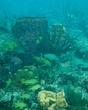 reef scenic fll 0110 IMG_0420 m.jpg