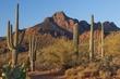 saguaro at movie pass 0510_MG_4533 m.jpg