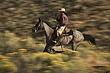 speed blur ponderosa ranch 09-02-051644 m.jpg