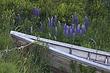stonington lupine and prow m.jpg