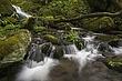 stream & mossy rocks 2 m.jpg