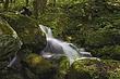 stream & mossy rocks 3 m.jpg