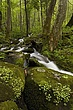 stream &mossy rocks upper level m.jpg