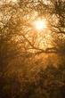 sunrise arizona 0410_MG_2661 m.jpg