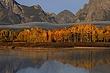 teton fall color m.jpg