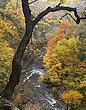 tinkers creek gorge m 2.jpg