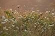 weeds devils den 0710_MG_6811 m.jpg