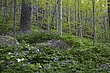 wildflower slope smokies m.jpg