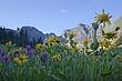 wildflowers ground level 0709_MG_5383 m.jpg