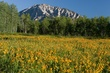 yellow flowers and mountain 0705 m.jpg