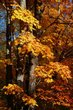 yellow leavesA9087.jpg