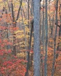 Tennessee forest in fall 1011_A1G2392 m.jpg