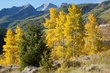 aspen and spruce 0911_MG_2711 m.jpg